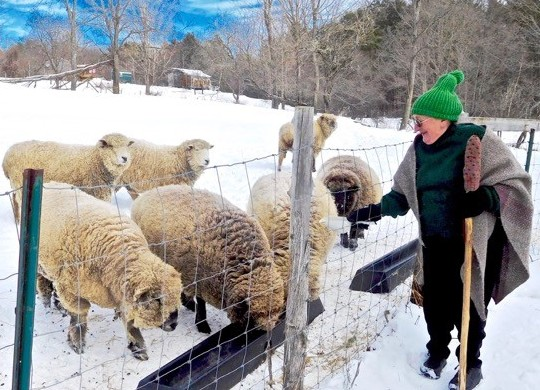 Dori Hamilton, dressed warmly in wool attire of her own making, is shown recently feeding her Oxford and Romney sheep on her Tranquil Vewe Croft in Lisbon. (Photo by Cary Clark)