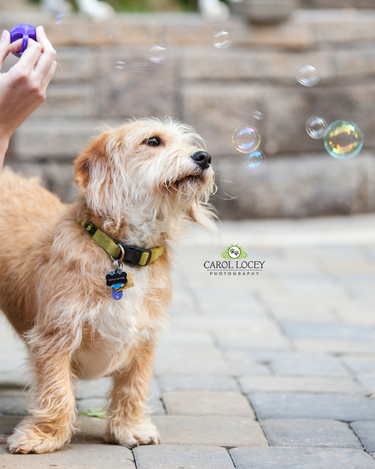 Puppy and bubbles