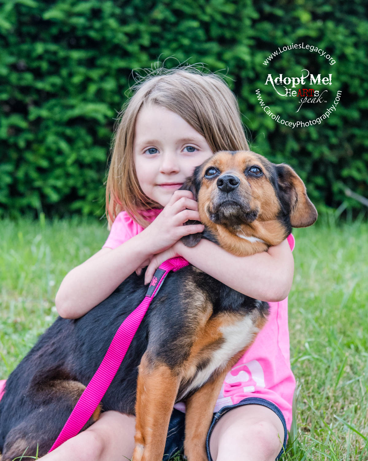 Young Volunteer, Abby, and her foster dog Missy.  Missy has been adopted.