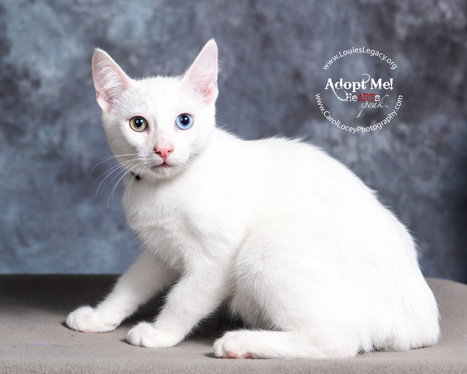 Donut has been adopted!