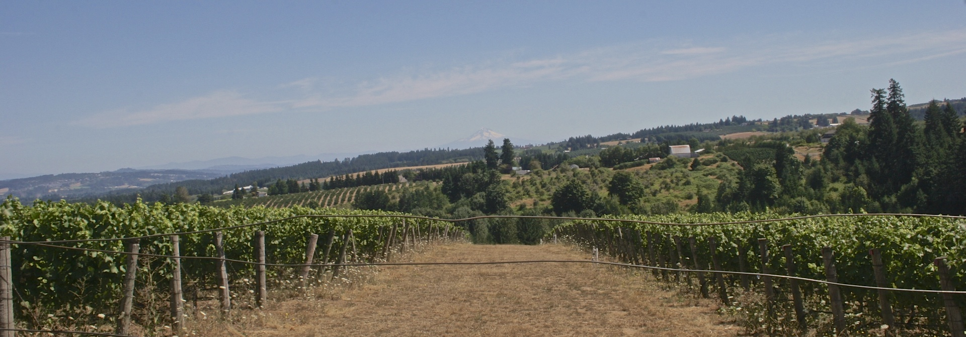 wine_country_william_kaven.jpg