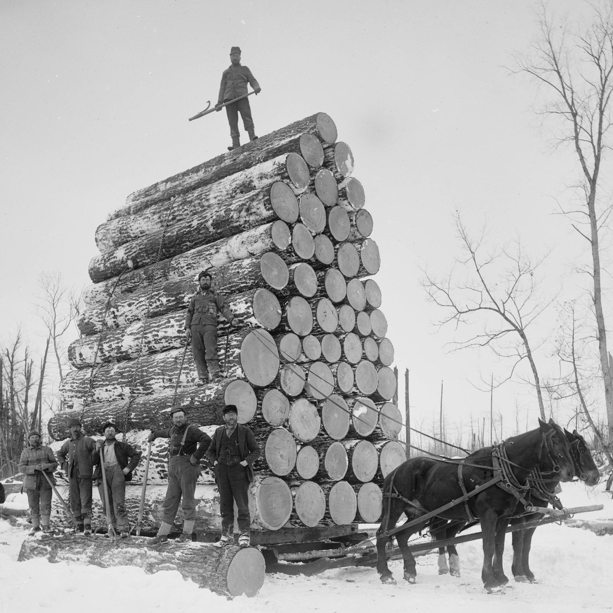 Logging+1880-1899.jpg