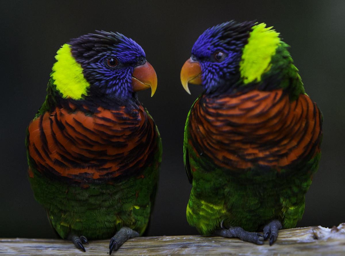 Bird Gallery
