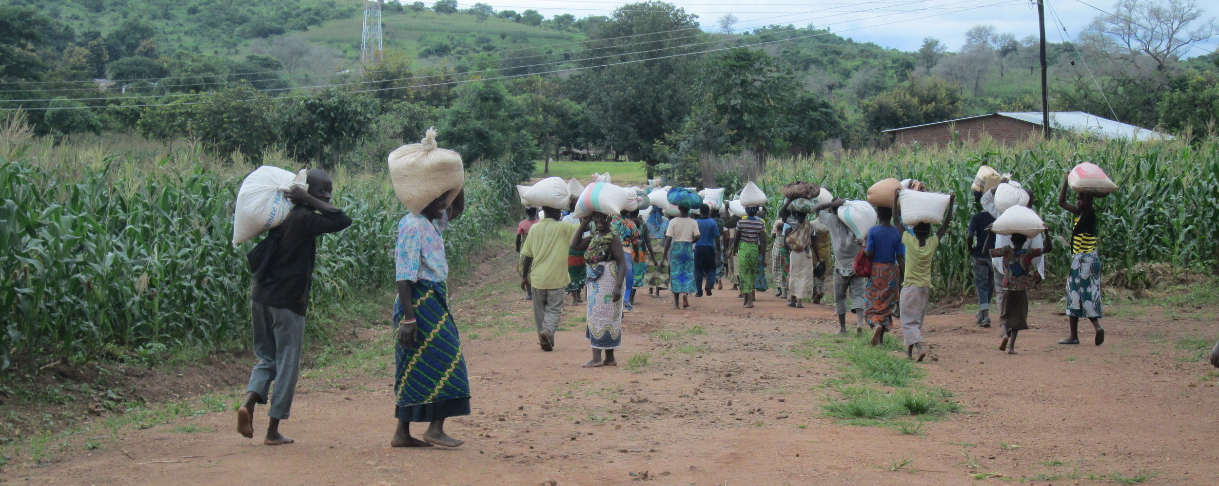 Families leaving with their corn.