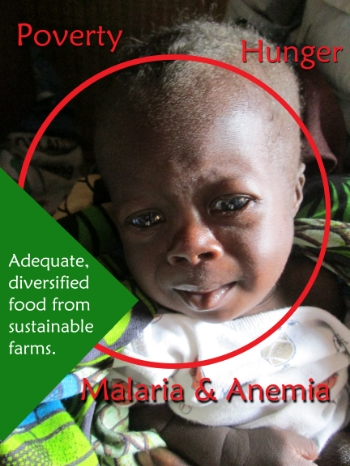 Children weak from hunger and inadequate variety of food are more vulnerable to Malaria, which then opens the door to Anemia and other diseases. Parents weak from Malaria and Anemia are caught in the hopeless cycle of hunger-basedpoverty.