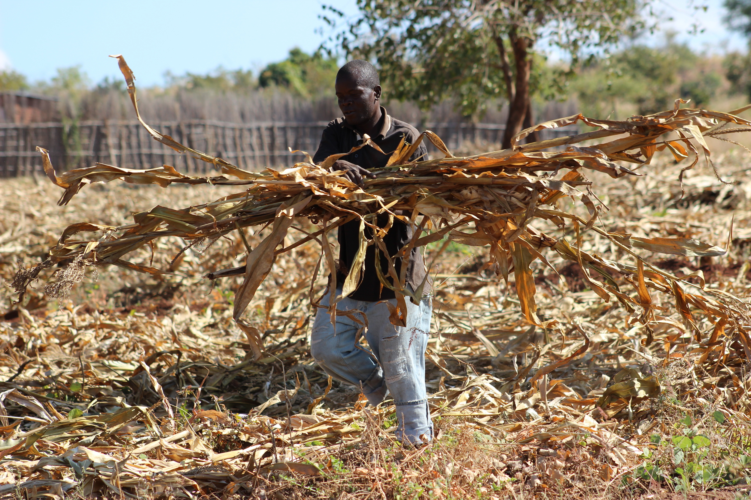 Keeping the ground covered during the dry season has doubled our crop production.