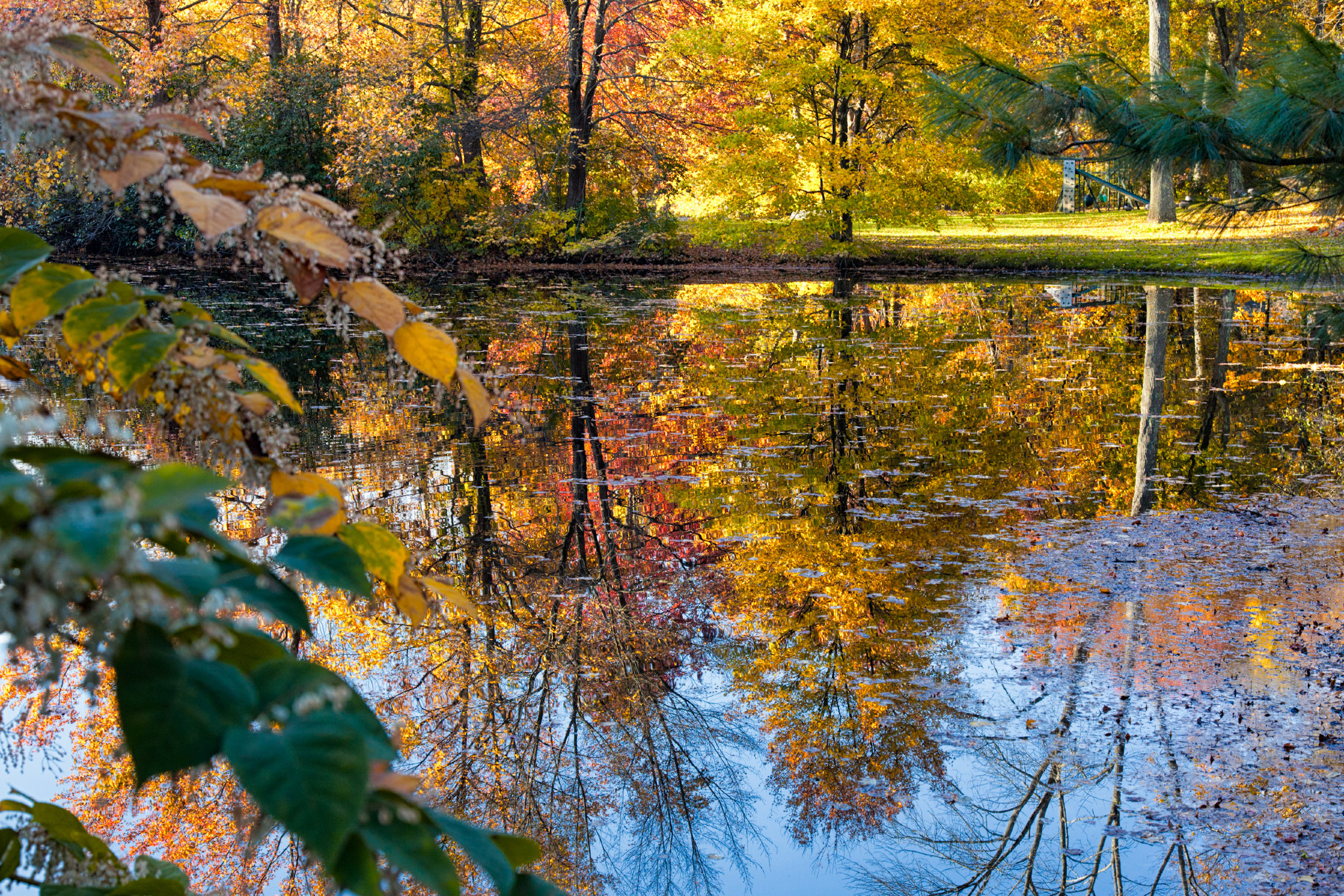 FabioBoscoPhotography_Fall Colors on Display-.jpg