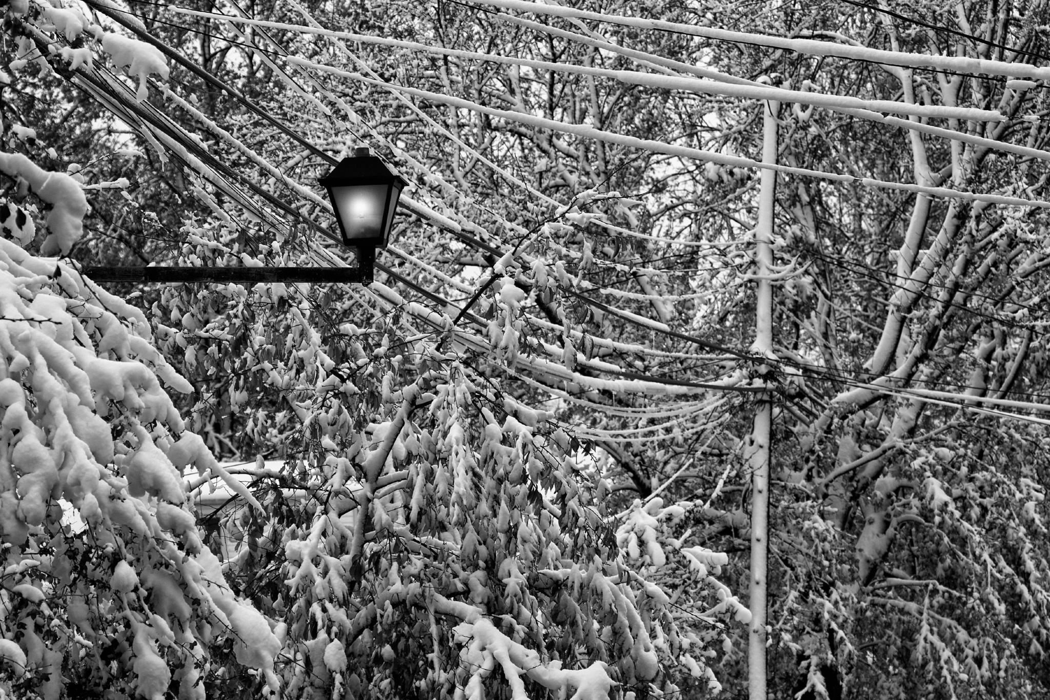 FabioBoscoPhotography_Snow covering-.jpg