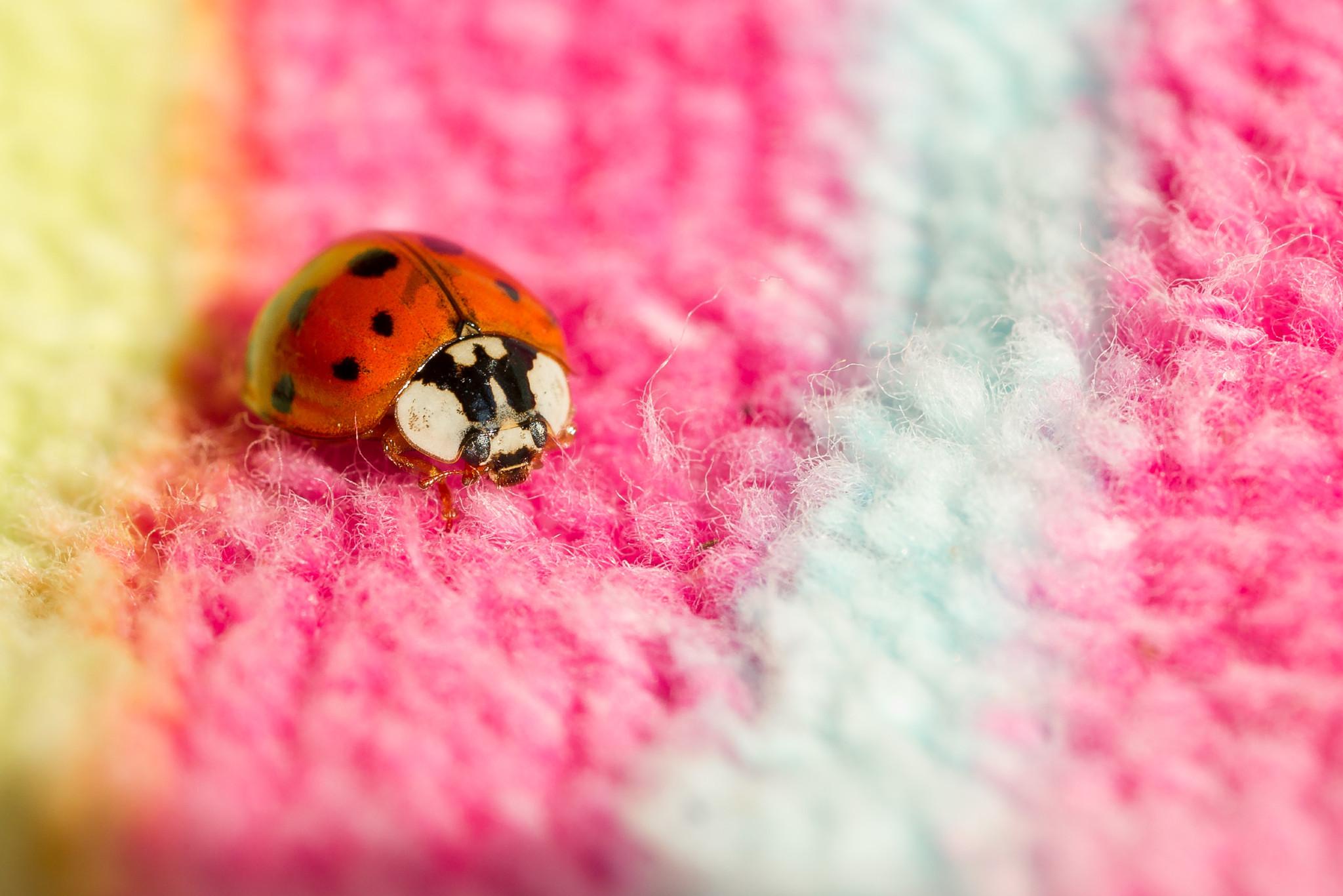 FabioBoscoPhotography_Ladybug on the Beach Towel-066298.jpg