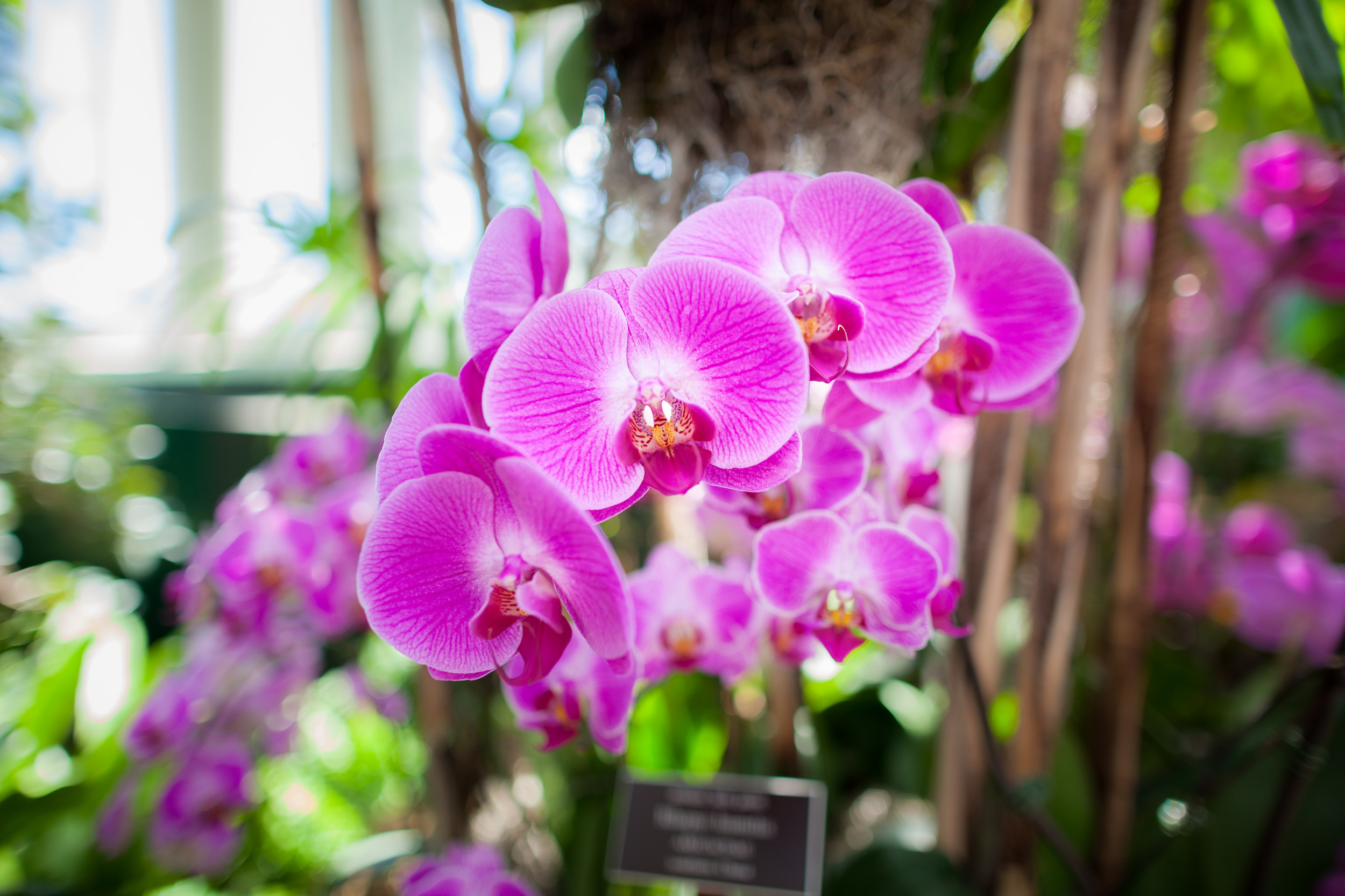Leaning pink Orchid