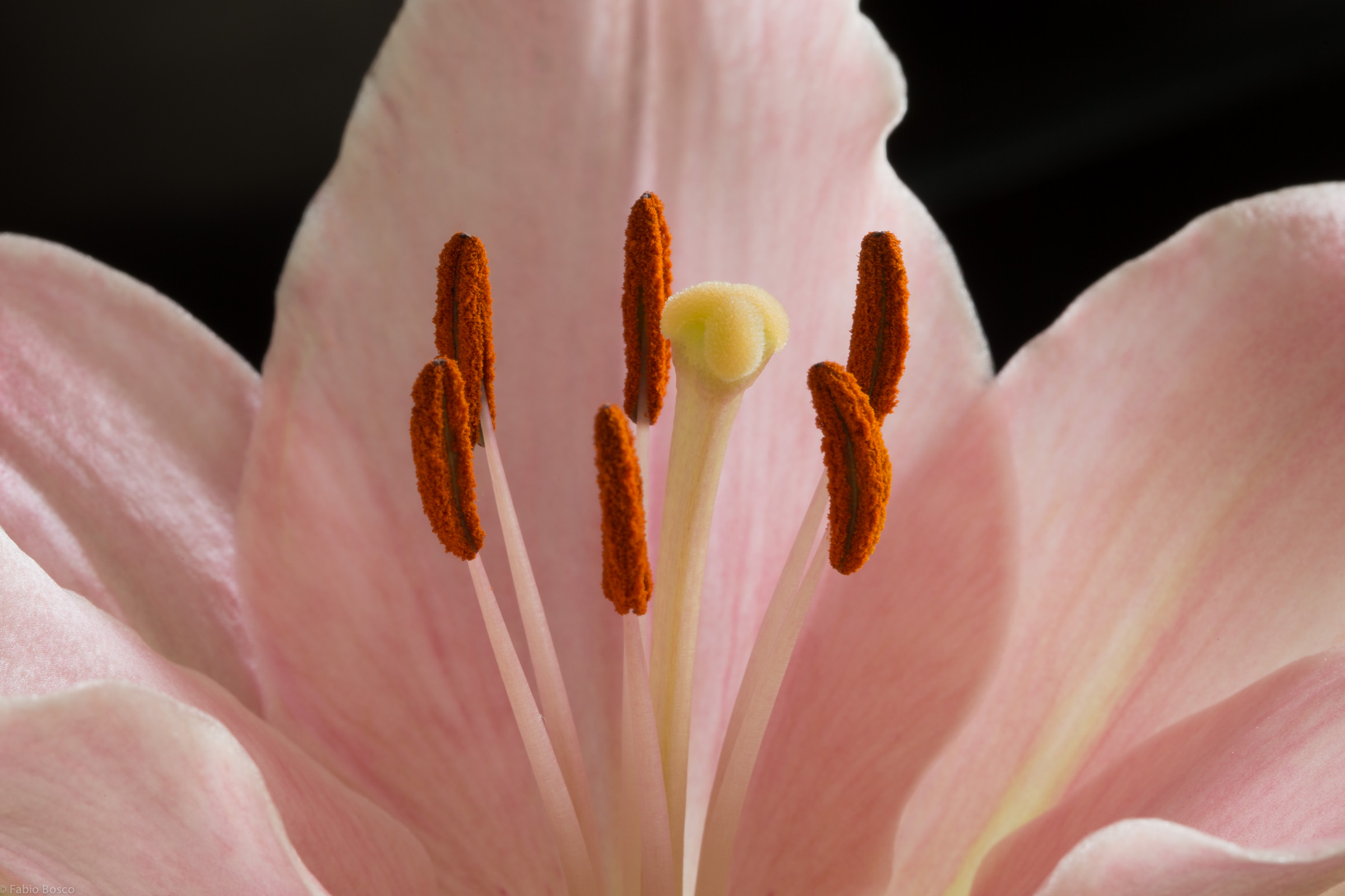 A flowers Stigma and Anthers