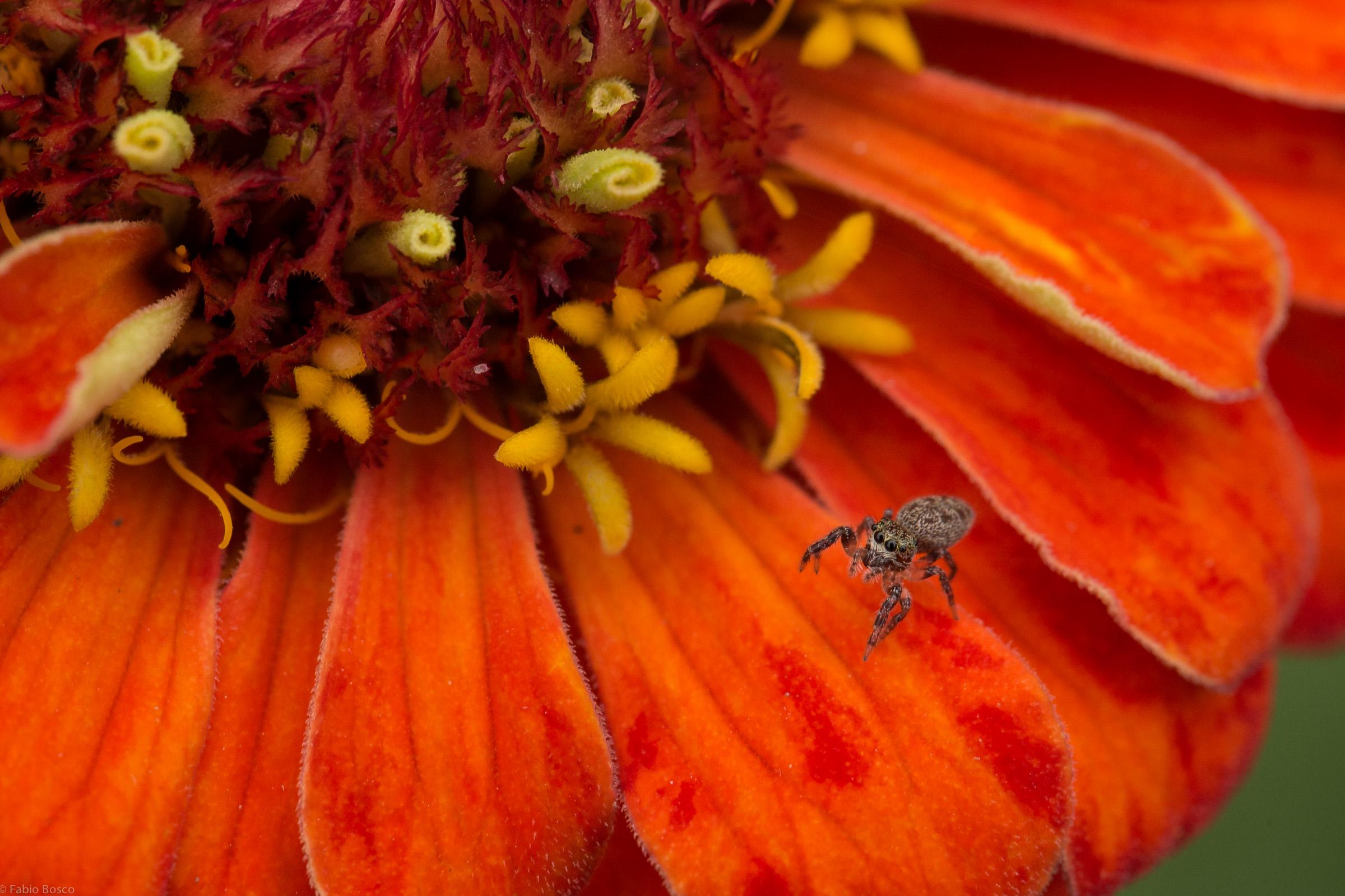 FabioBoscoPhotography_Little spider on the flower-098414.jpg