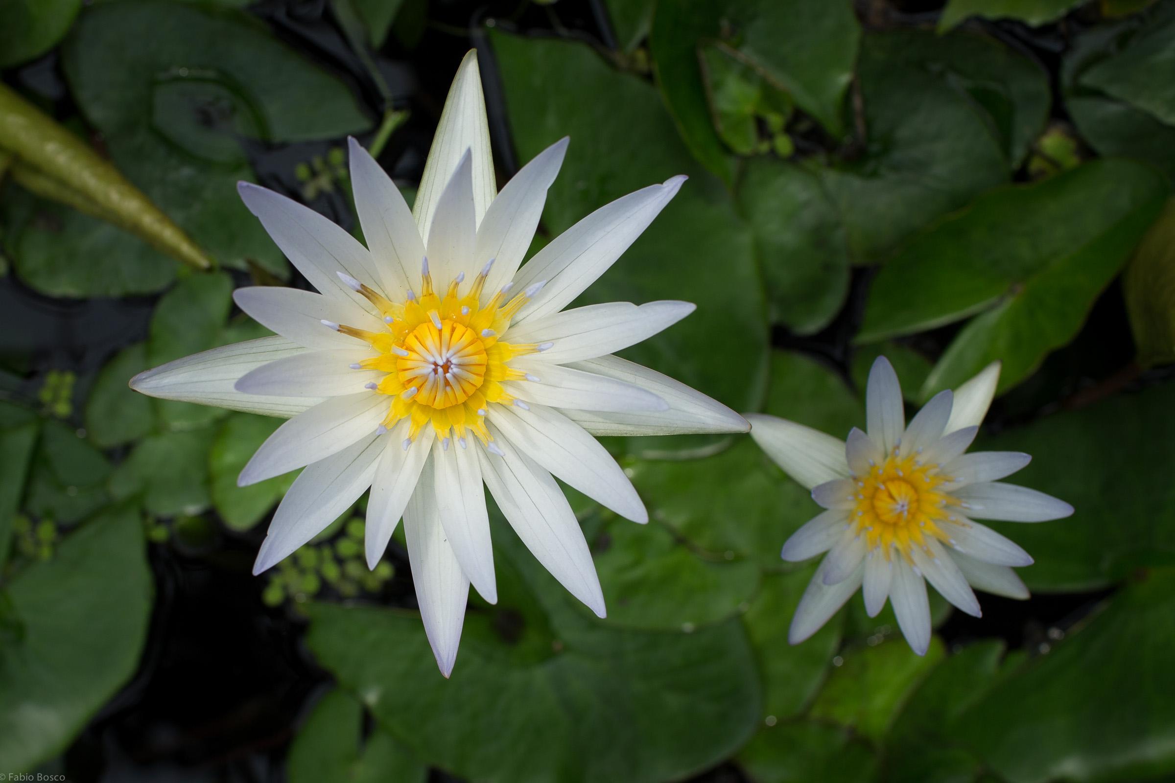 FabioBoscoPhotography_Spring is here-106627.jpg