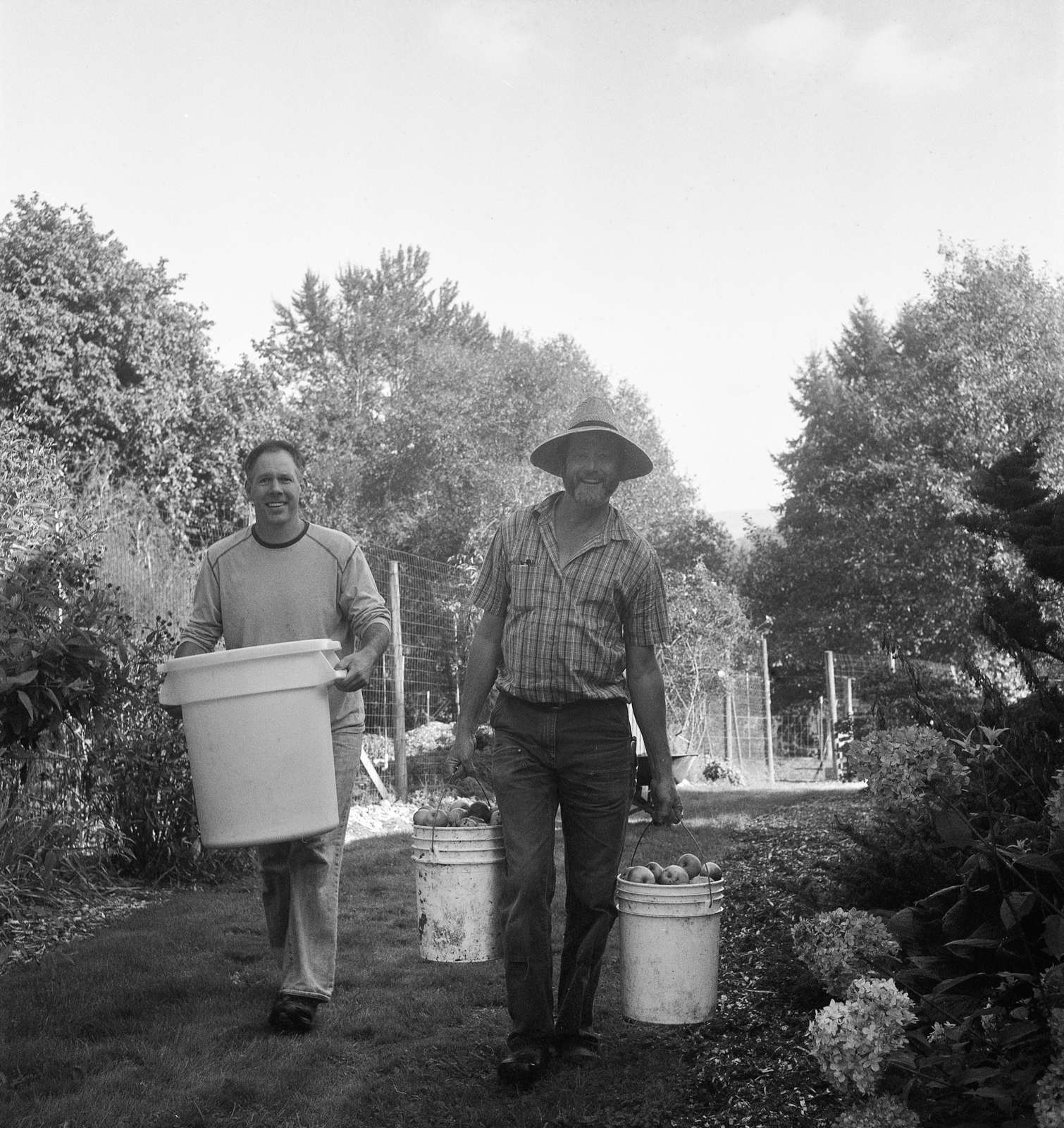Simon Ewing's dad carrying apples during the community apple pressing event, 2011.