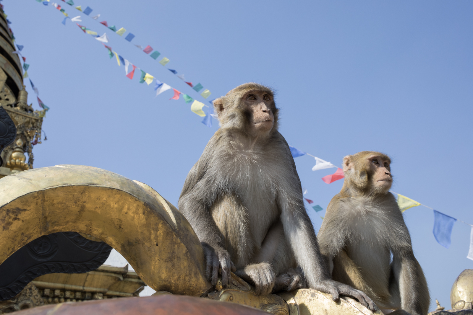 Two macaque monkeys sit on top of a thunderbolt sculpture. Swayambhunath is known by Westerners as the Monkey Temple. Prayer wheels circle the temple which has Buddha's eyes painted on the top level.