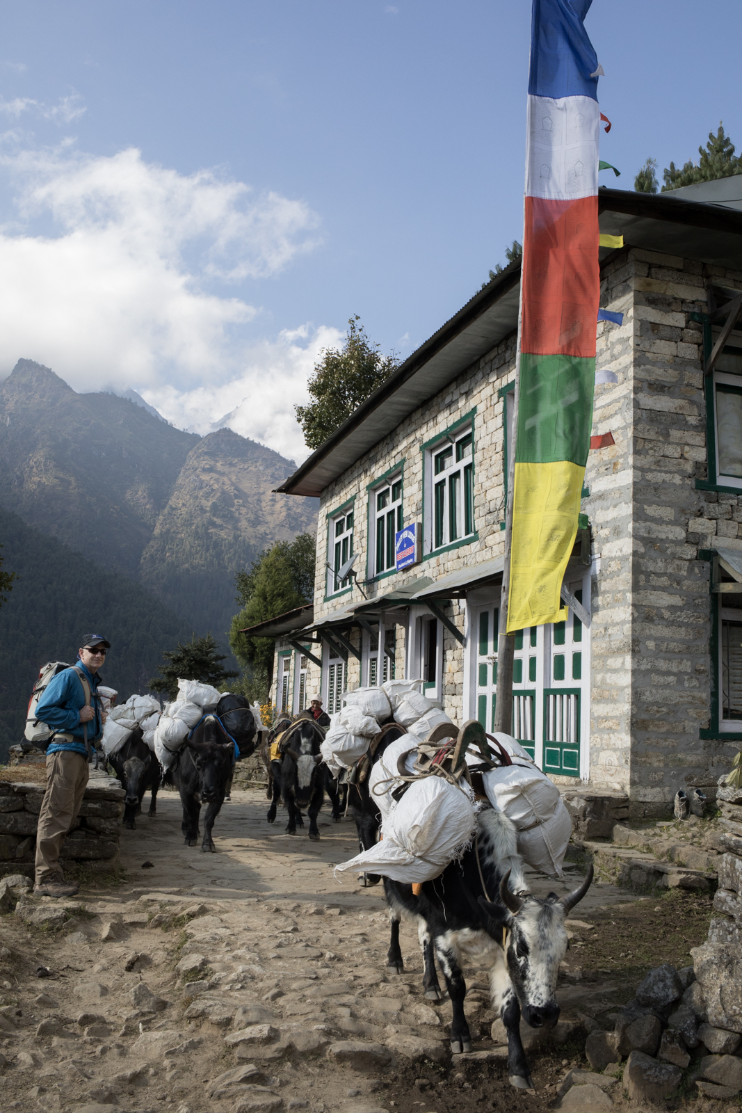 Ambrose stands to the side of the path as a group of Dzo carry supplies back to Lukla.  Dzo are a hybrid of cattle and yaks and can be found commonly in the lower altitude regions of the Everest valley.