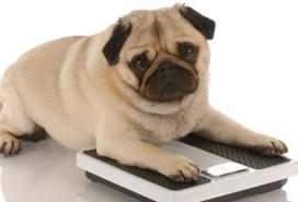 obesedog.jpg