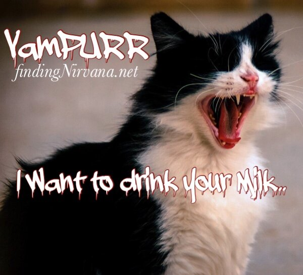 My VamPURR Cat