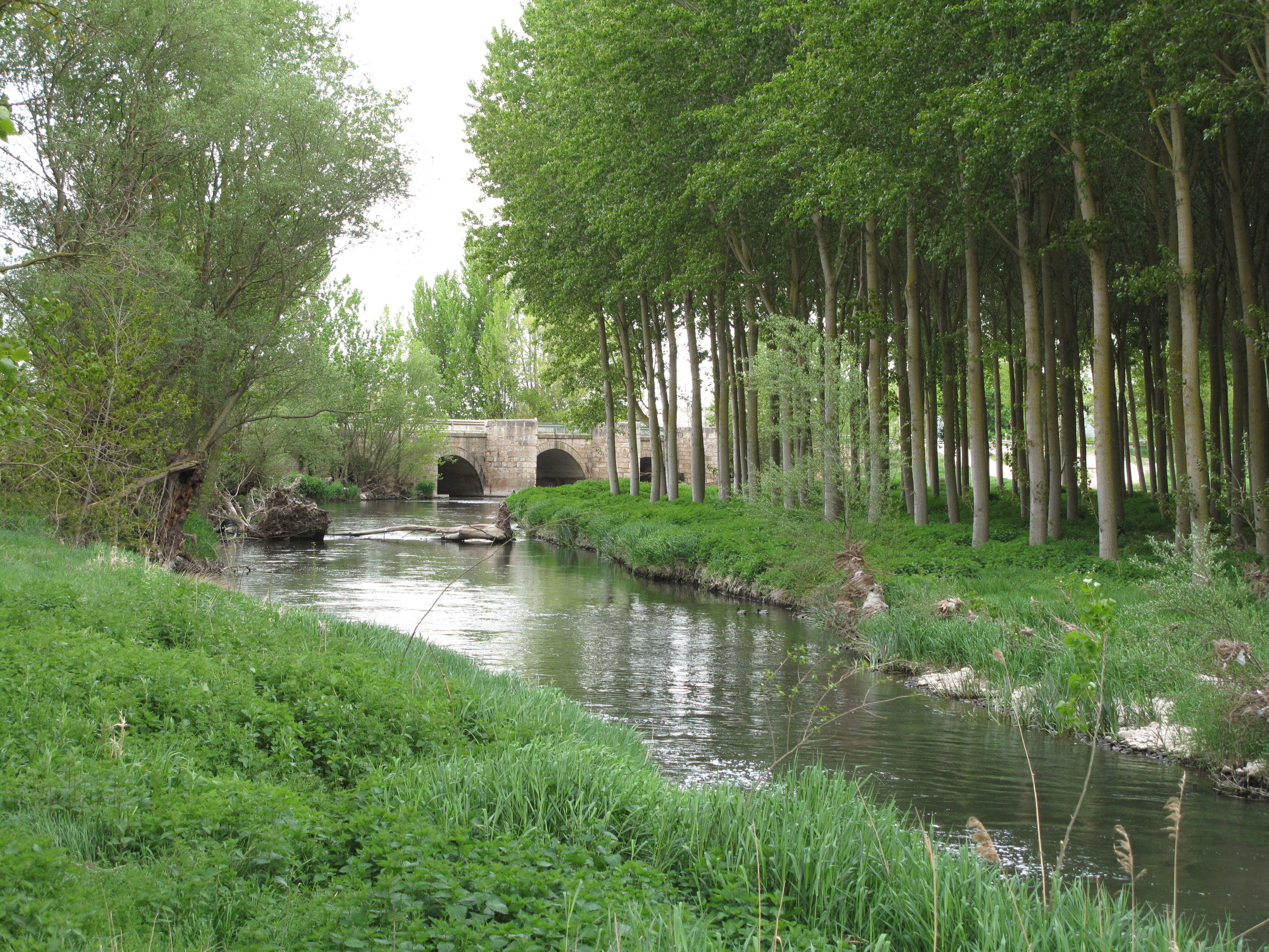 The walk out of Burgos was nice for a bit. Can you tell I like walking by rivers and streams?