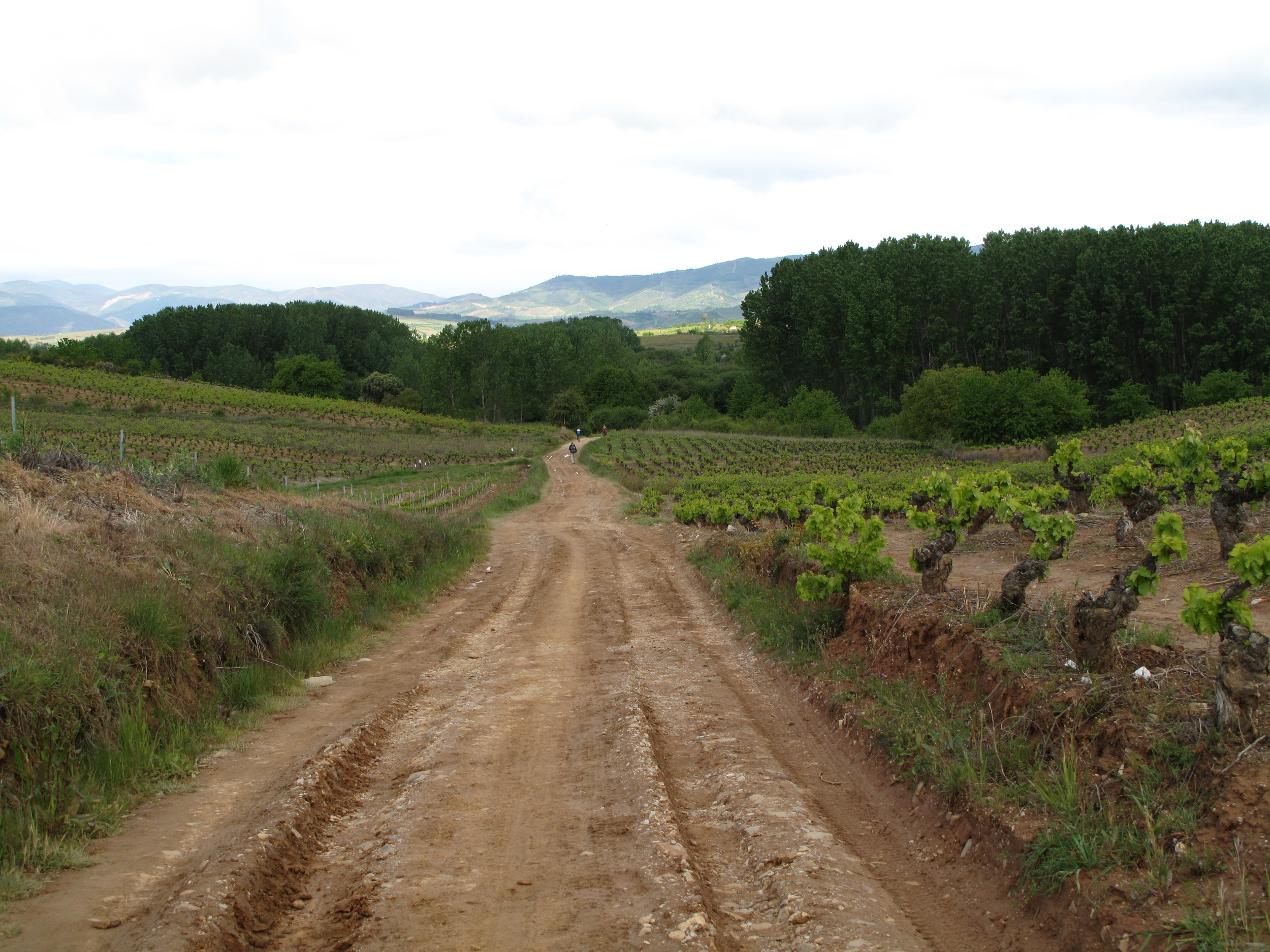Walking through fields of grapes was one of my favorite activities. This walk into Villafranca del Bierzo is one of the most scenic, in my opinion.