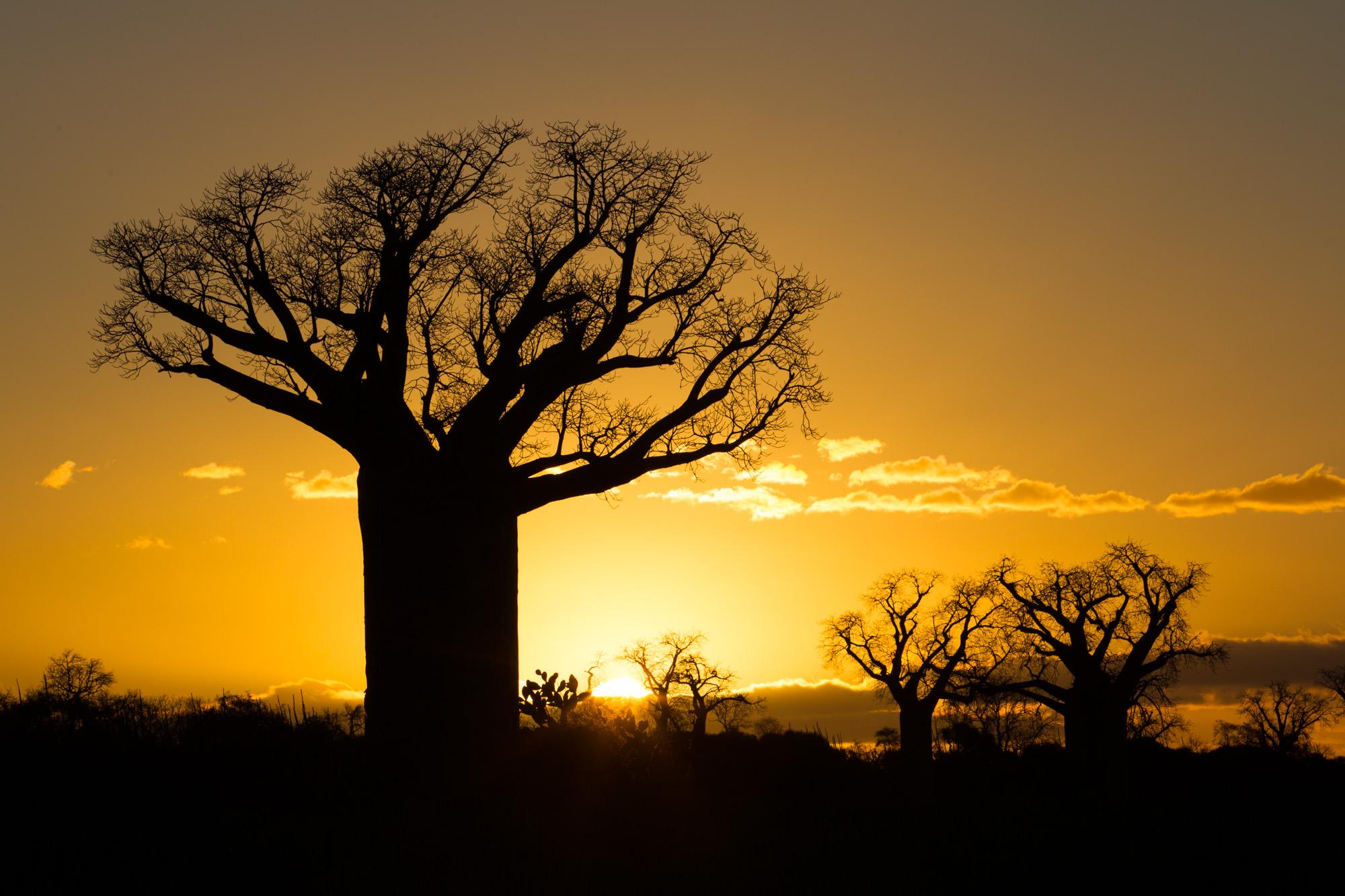 baobab-1.jpg