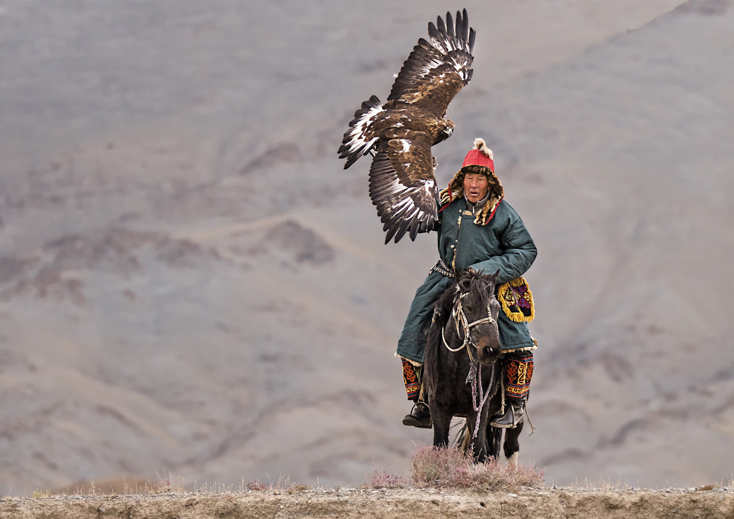 release of the golden eagle.jpg