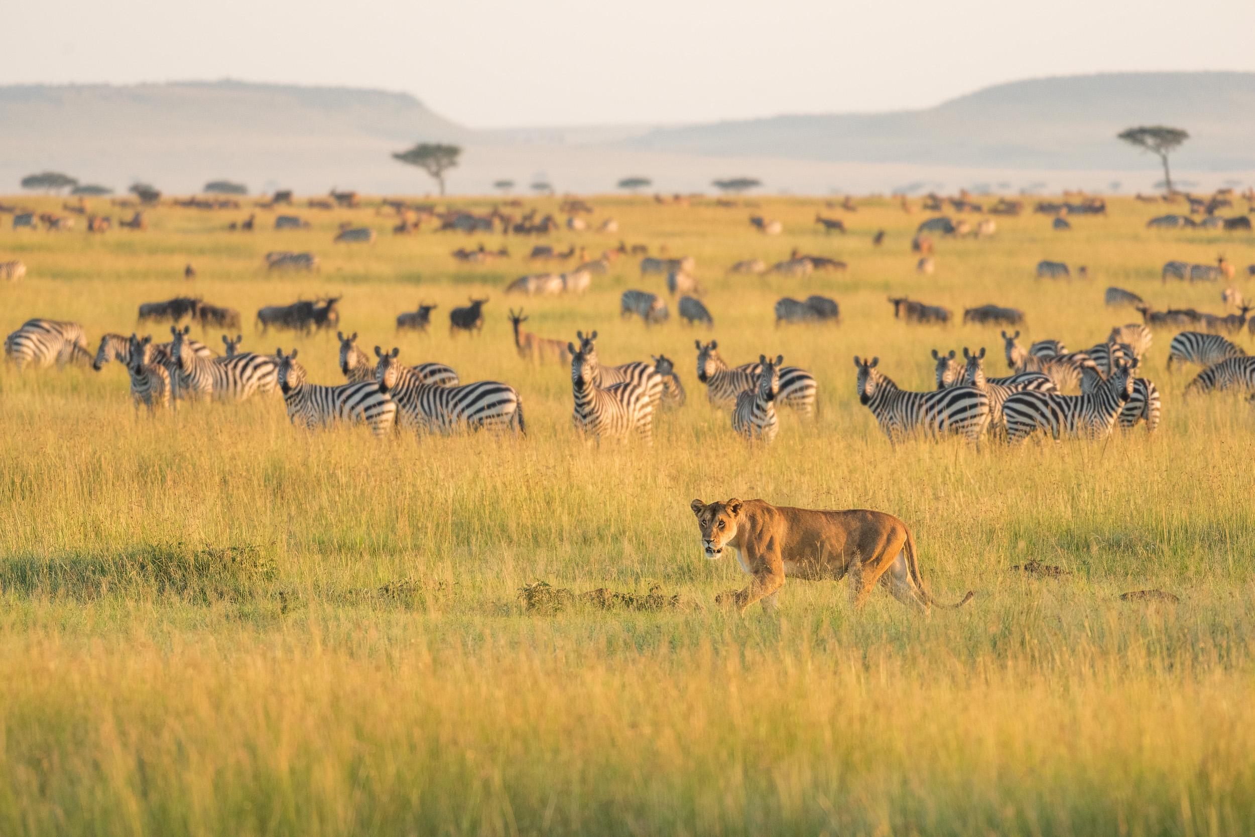 muench-workshops-tanzania-photo-safari.jpg