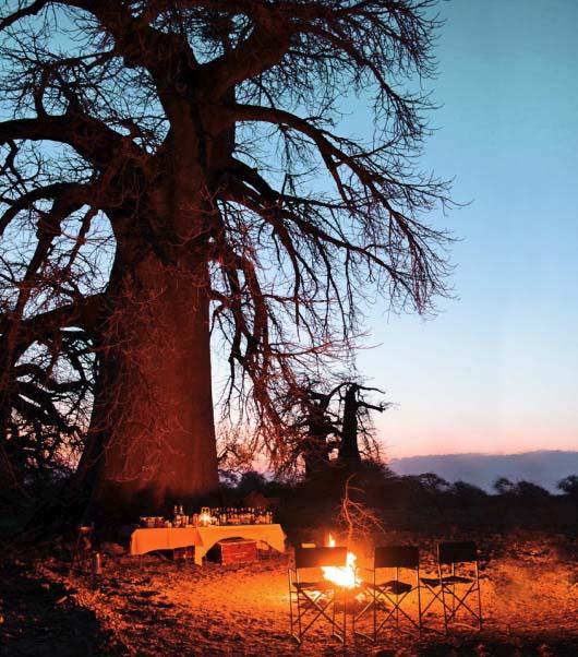Island of Baobabs.jpg
