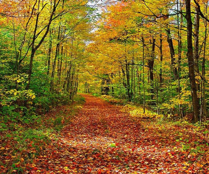 Logging Road near Lake Eaton in Autumn