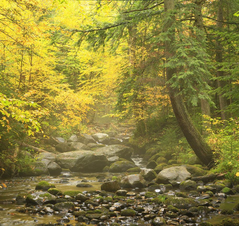 Pine-Brook-near-Forked-Lake-in-fog-fall-2015-soft-glow (1).jpg