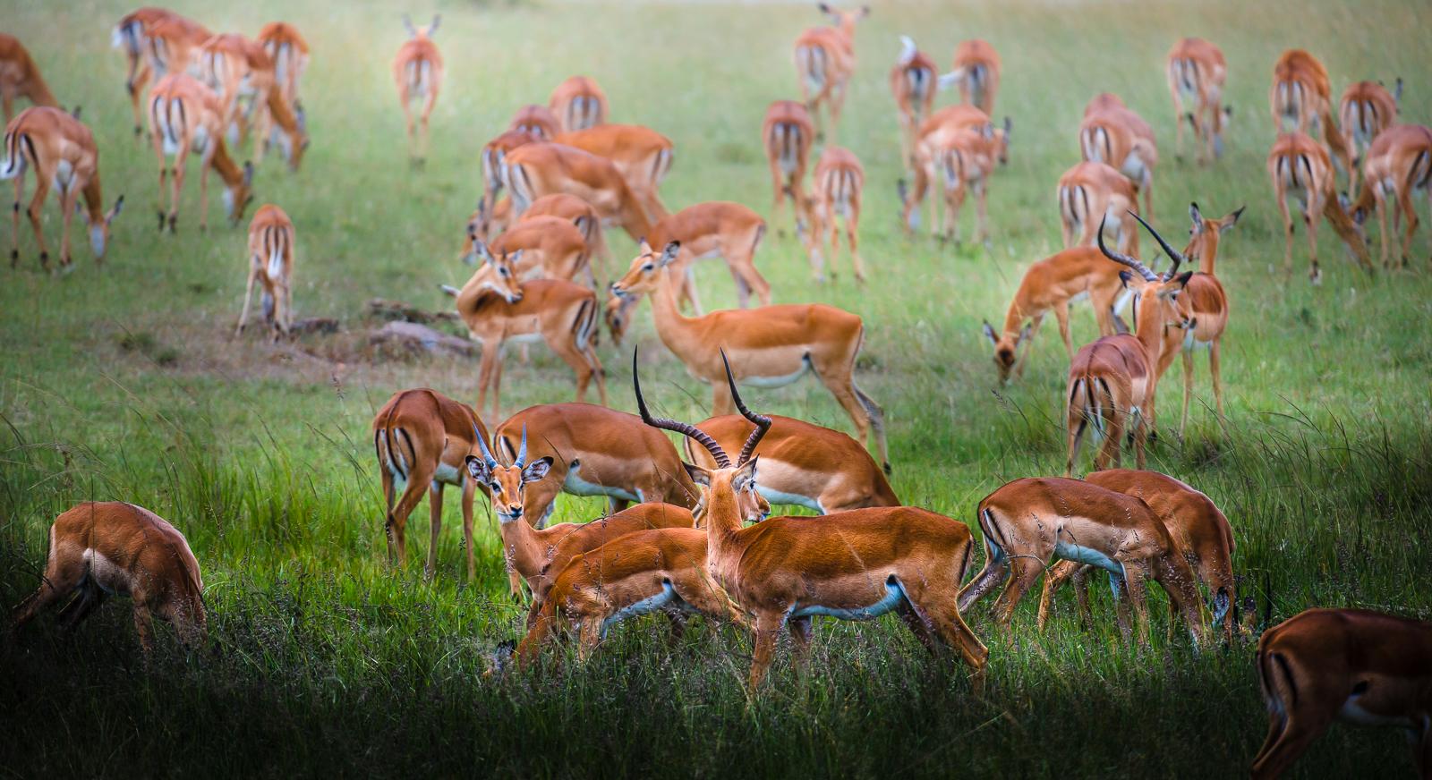 photo-workshop-safari-kenya-10.jpg