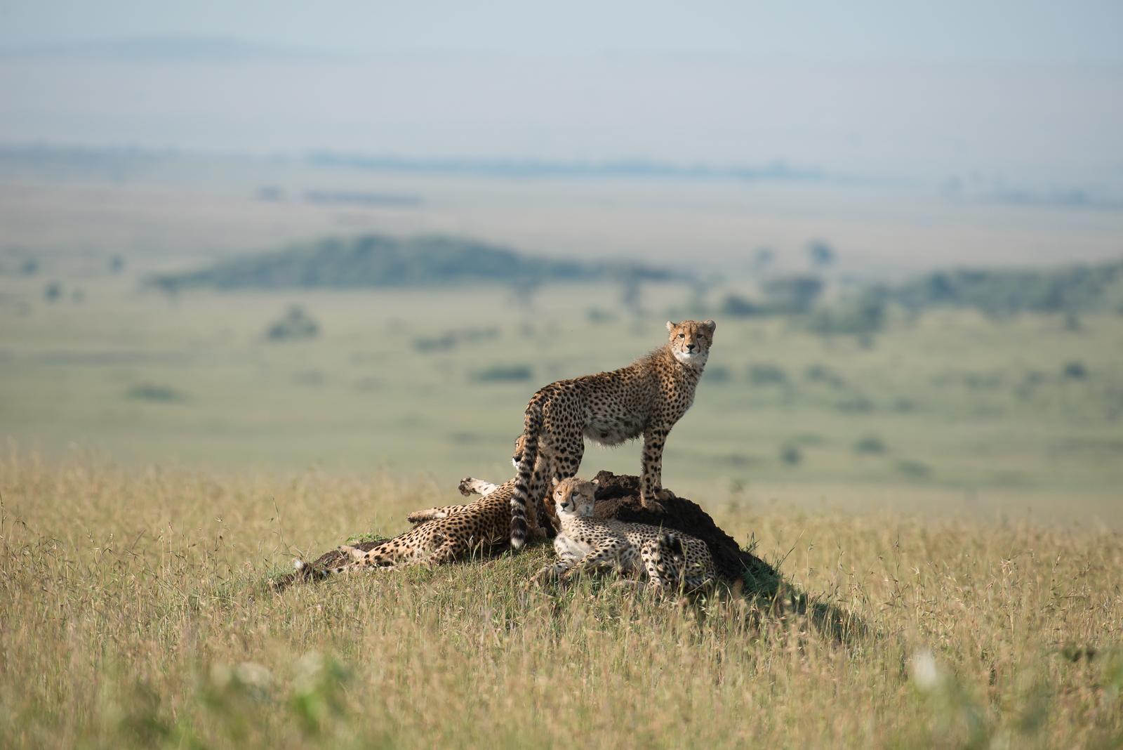 photo-workshop-safari-kenya-12.jpg