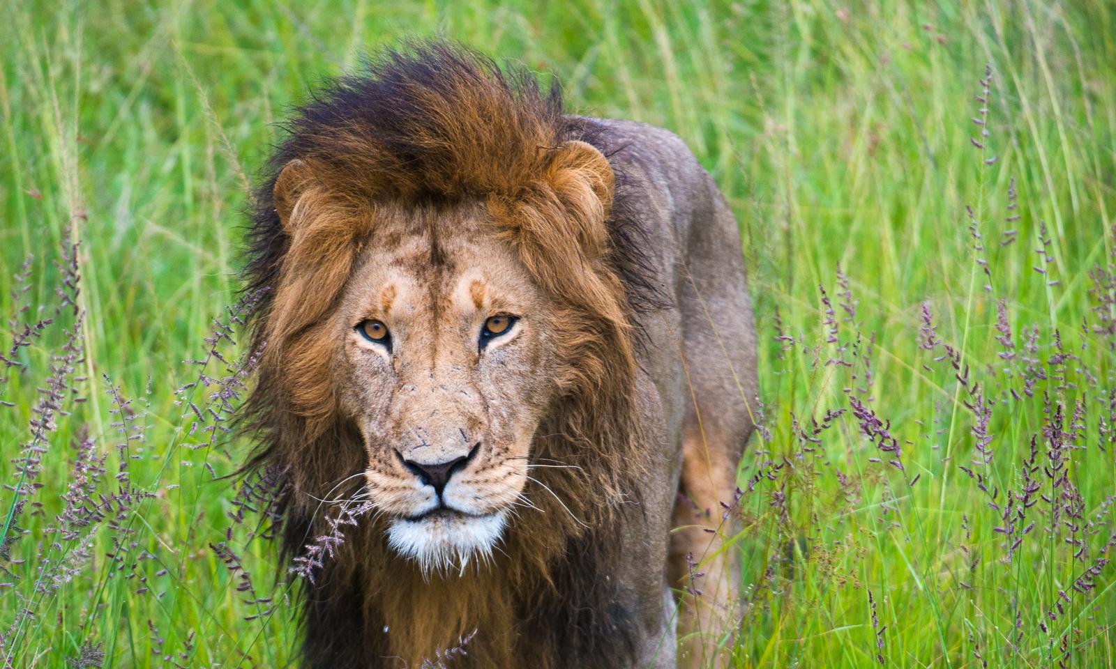 photo-workshop-safari-kenya-11.jpg