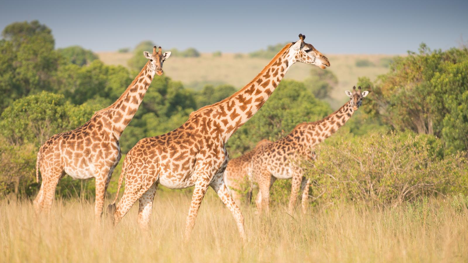 photo-workshop-safari-kenya-13.jpg