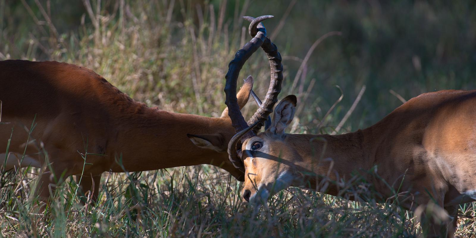 photo-workshop-safari-kenya-17.jpg