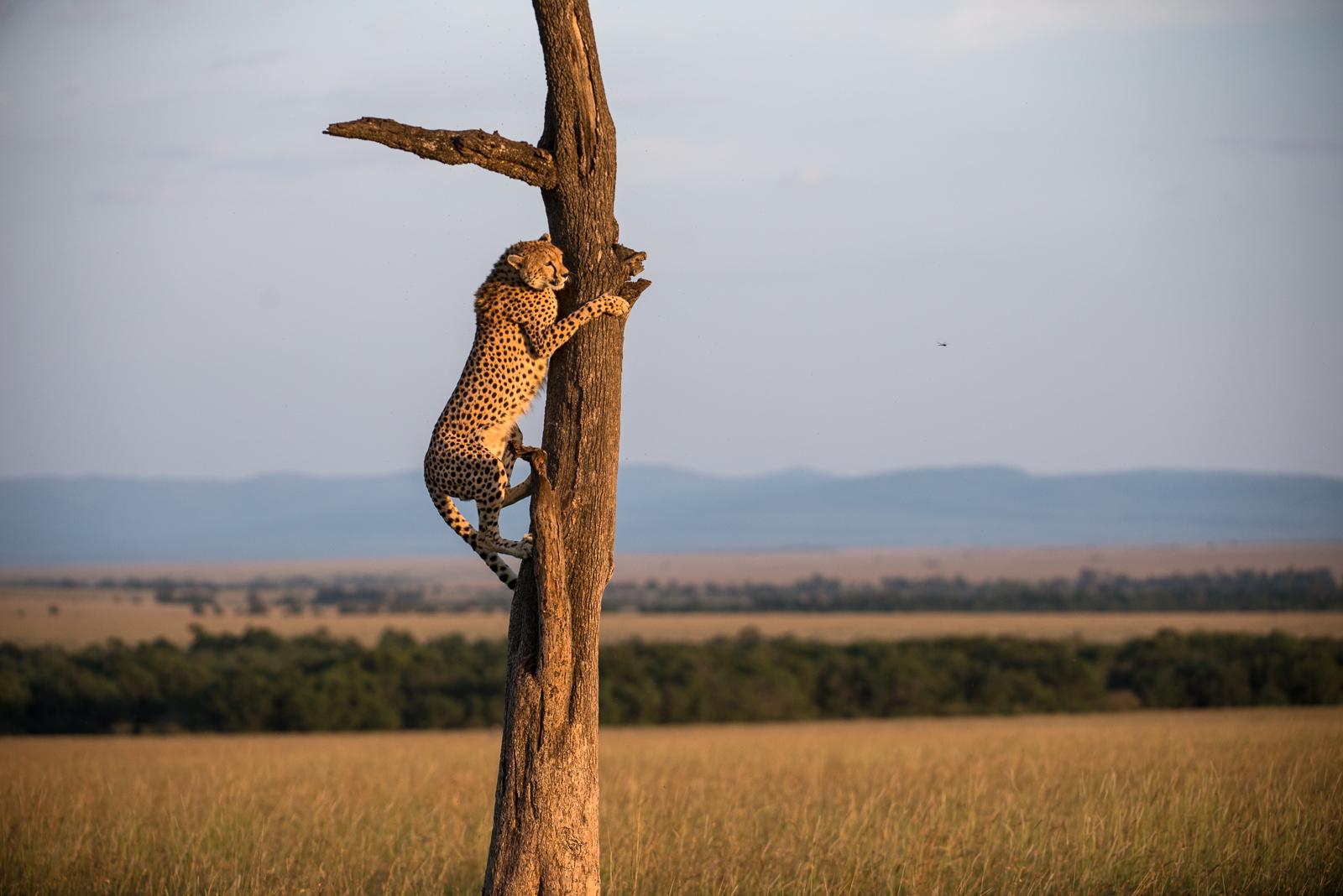 photo-workshop-safari-kenya-20.jpg