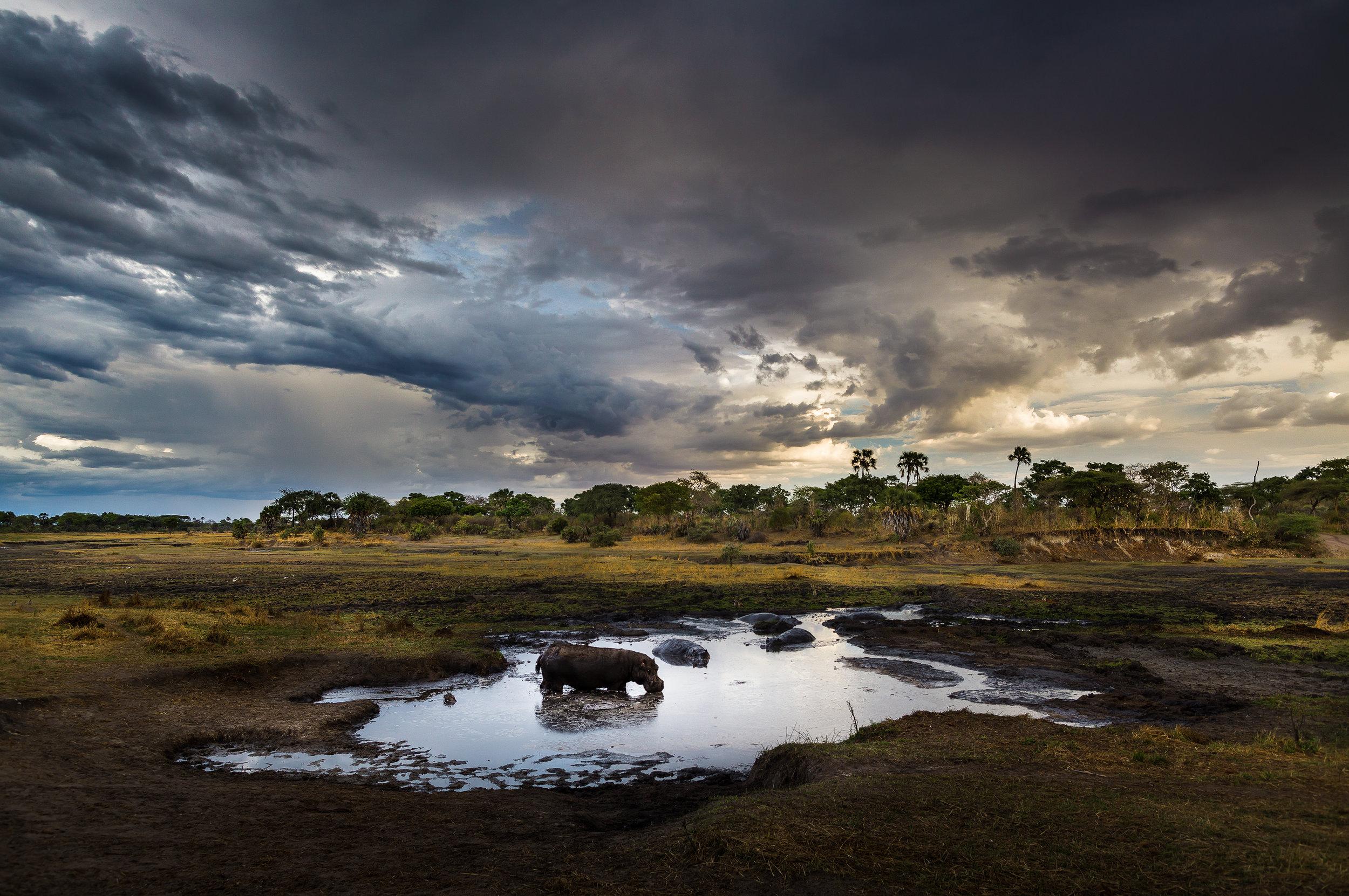 photo-workshop-tanzania-katavi-5.jpg