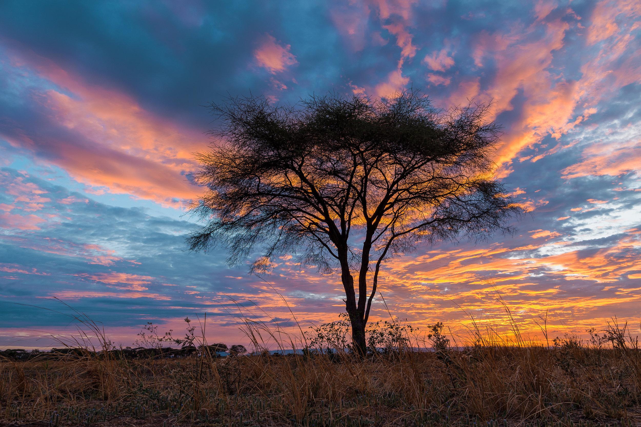 photo-workshop-tanzania-katavi-6.jpg
