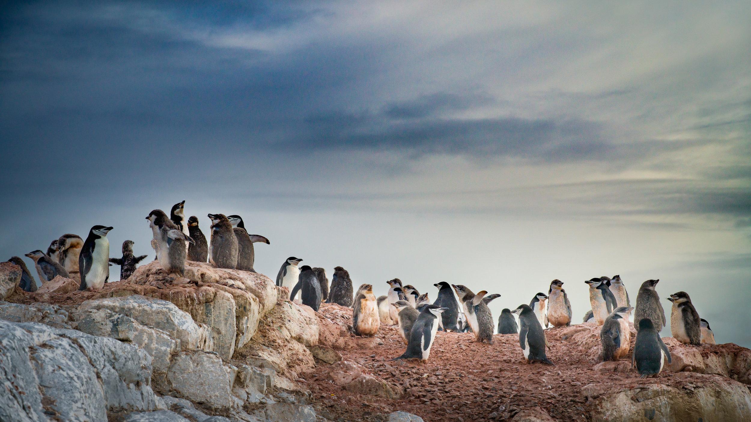 Antarctica-photo-workshop-1.jpg