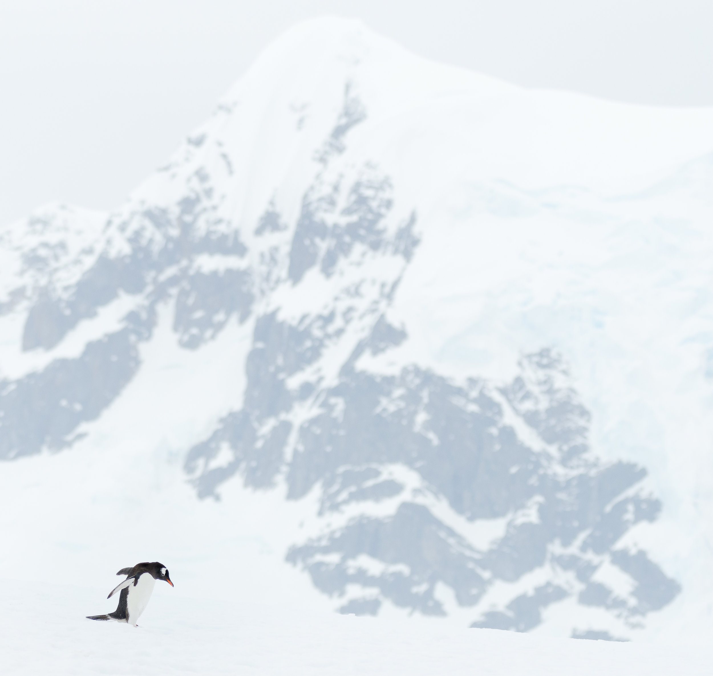 photo_workshop_antarctica-3.jpg