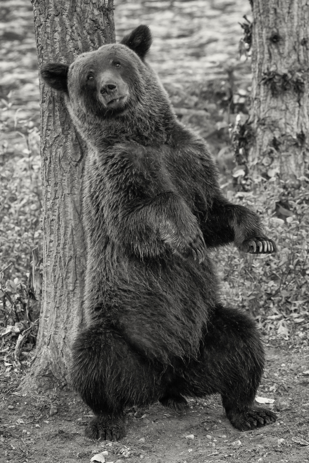 BC-Grizzly-Bears-2.jpg