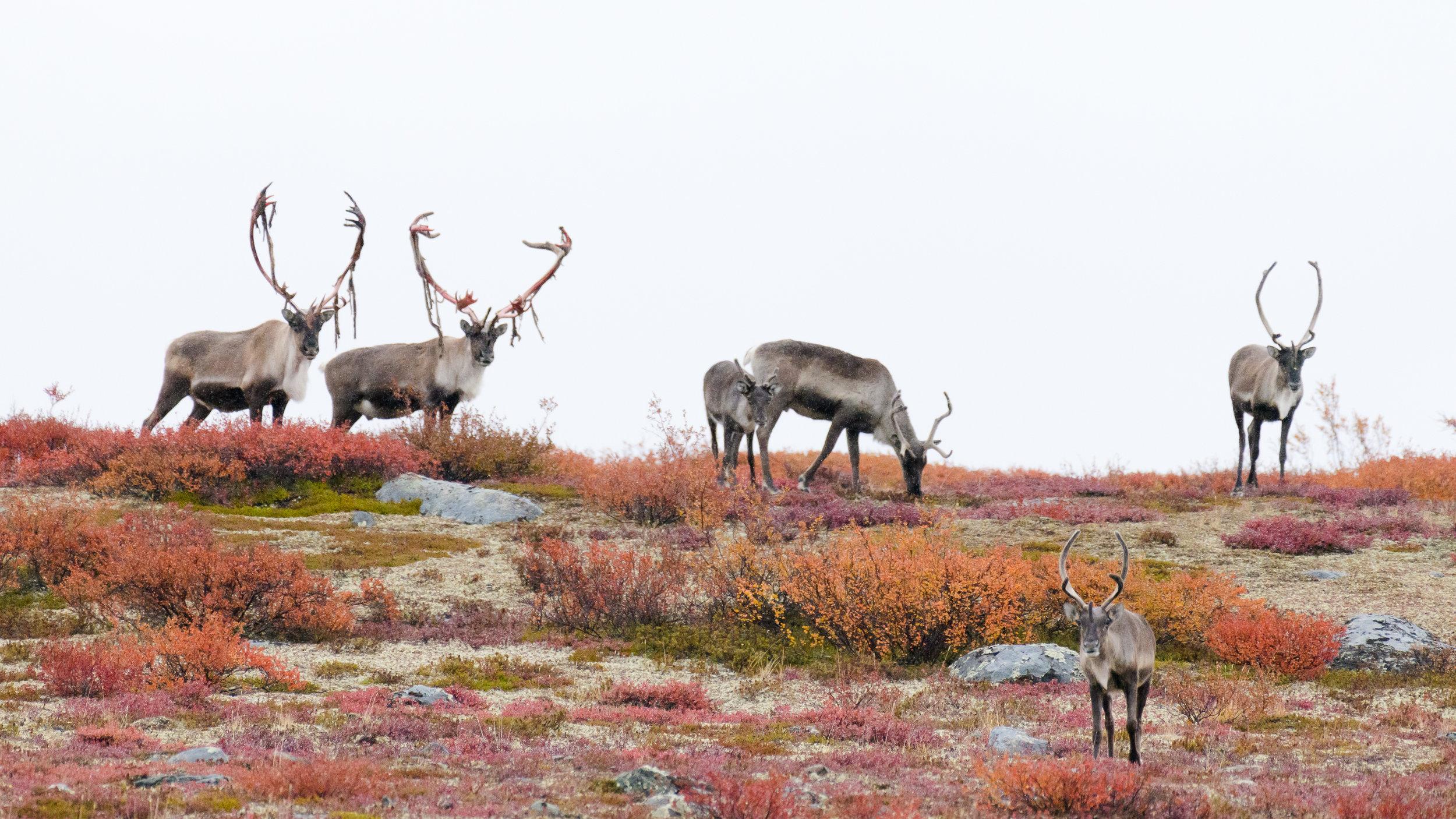 photo_workshop_canadian_arctic-2.jpg