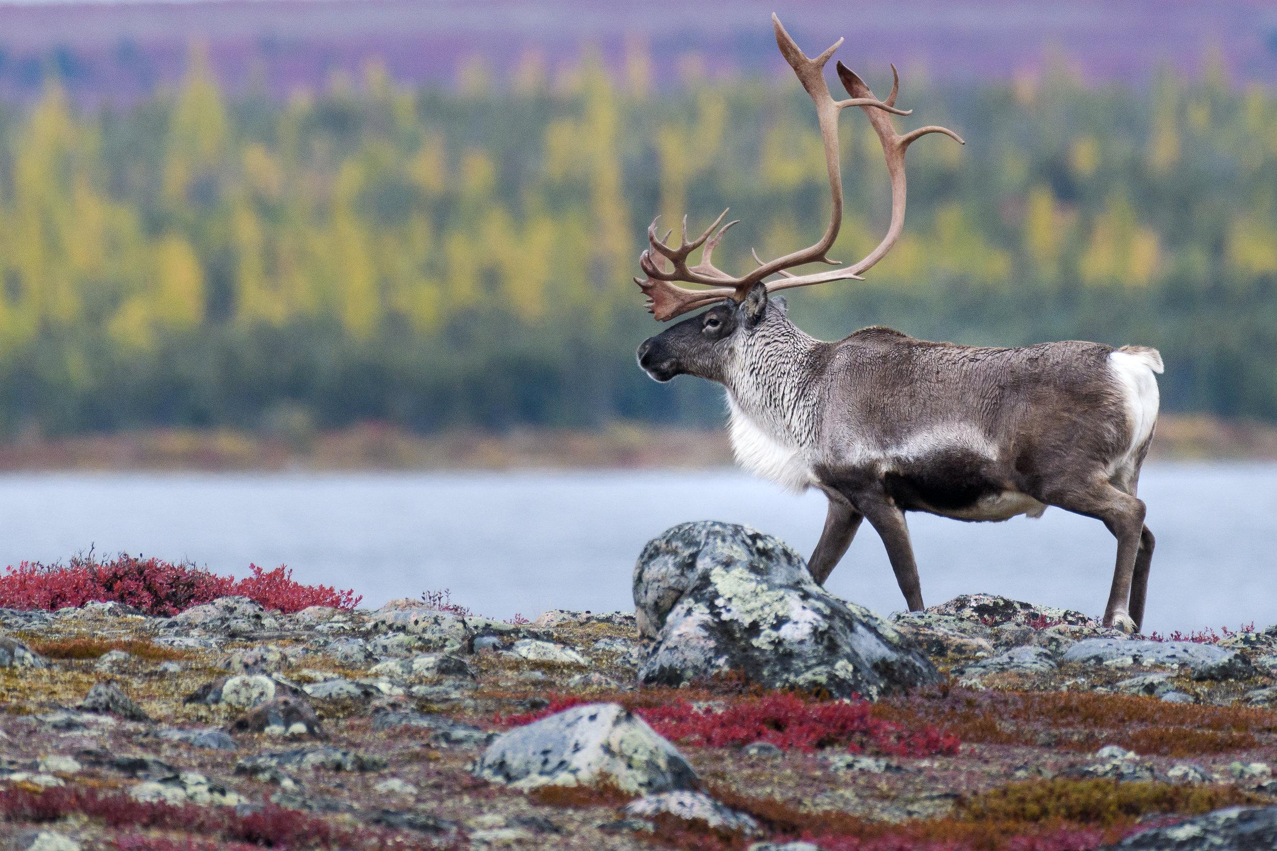 photo_workshop_canadian_arctic-7.jpg