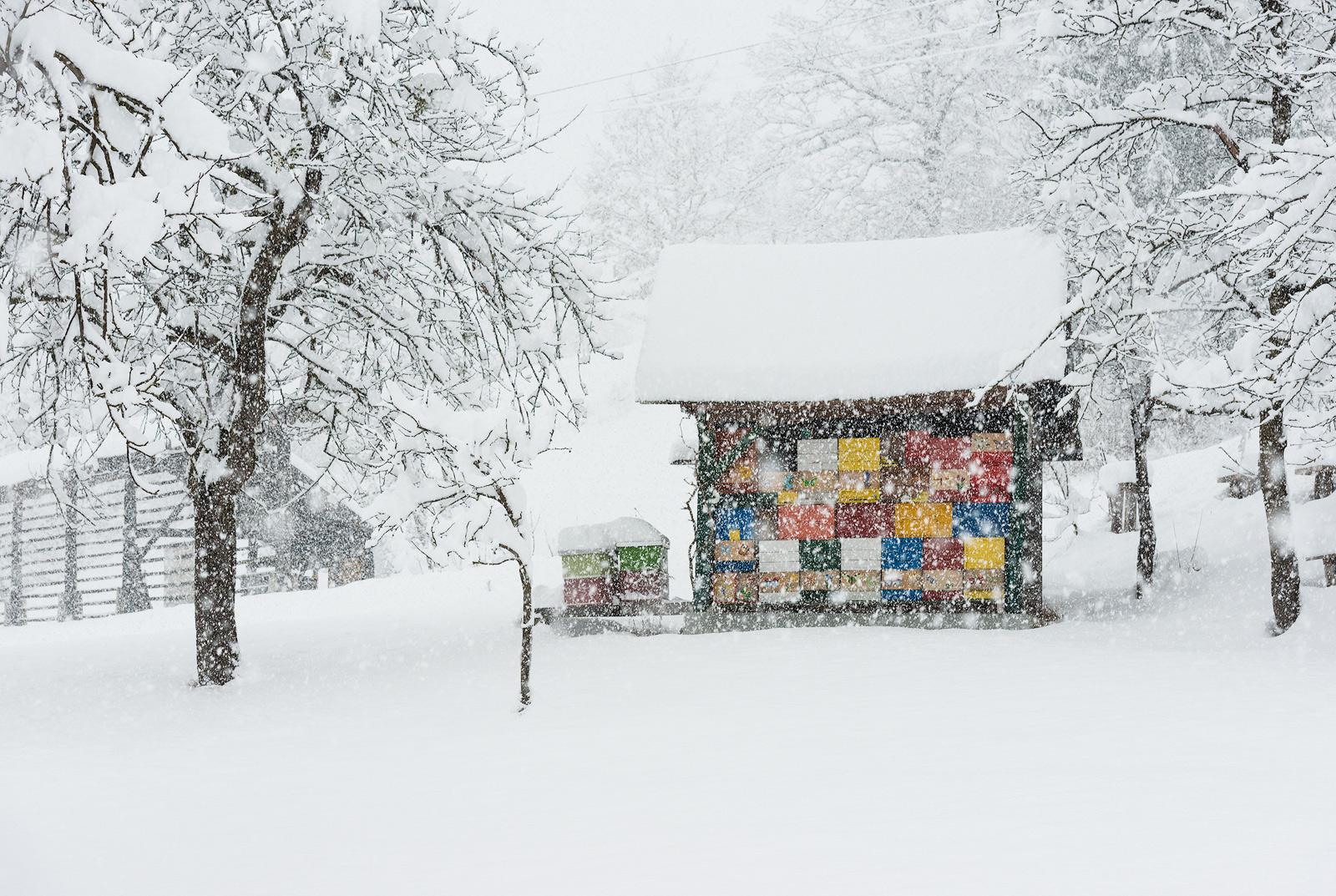 slovenia_winter_esenko_002.jpg