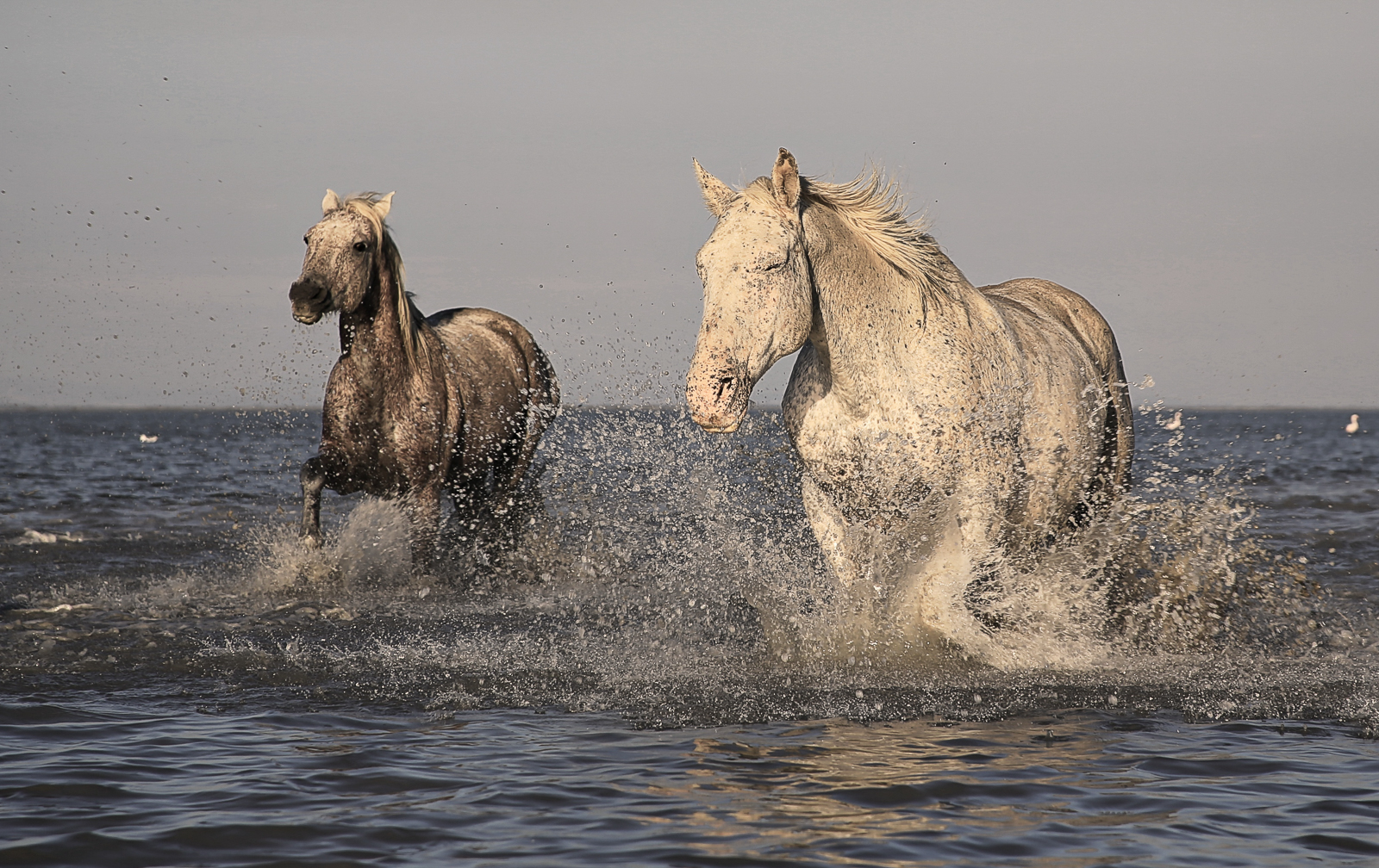 horse-1993174.jpg