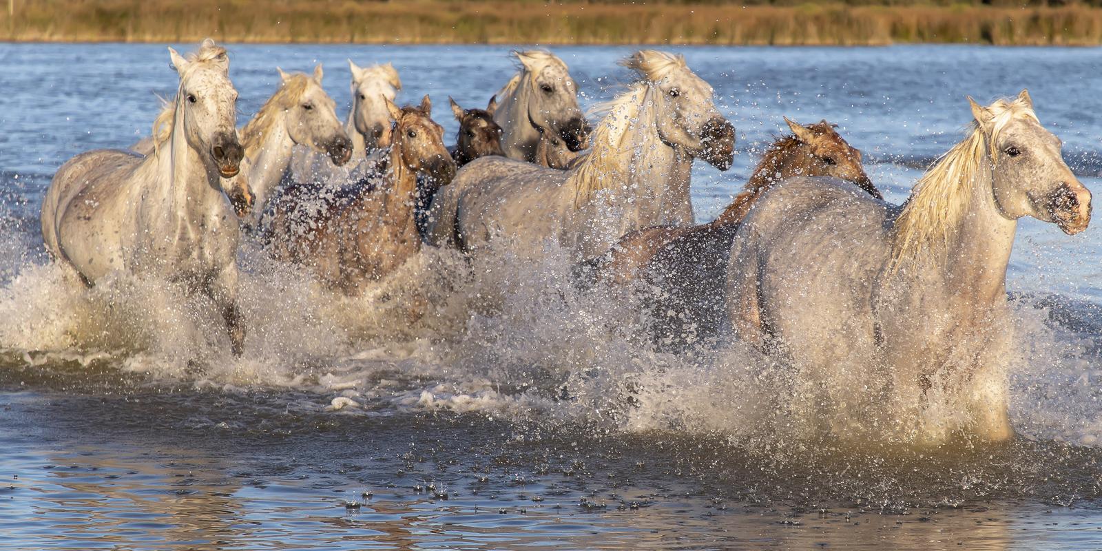 horses-3723776.jpg