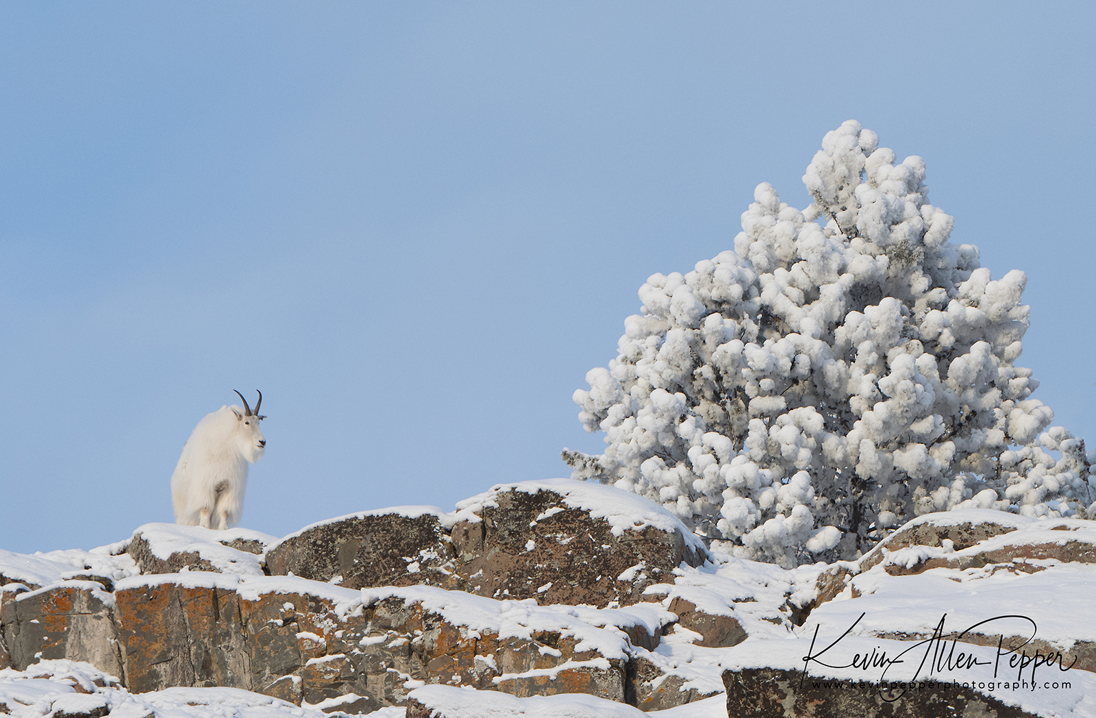 mountain goat and blue sky.jpg