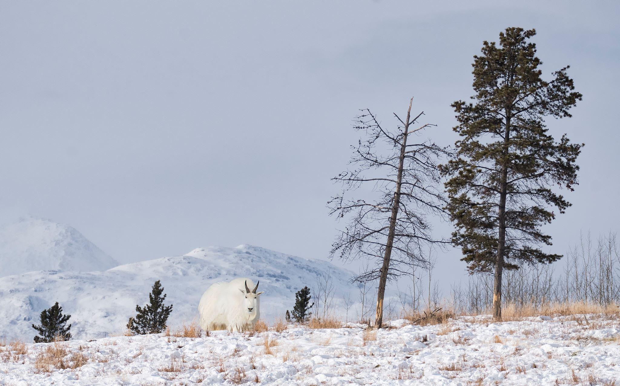 Photo Credit: Kevin Pepper, 2018 Yukon Workshop