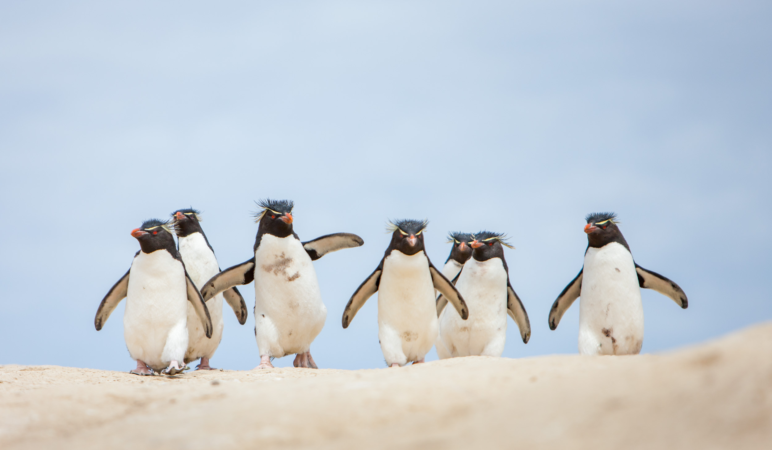 muench-workshops-falklands-south-georgia-antarctica-will-burrard-lucas-1.jpg