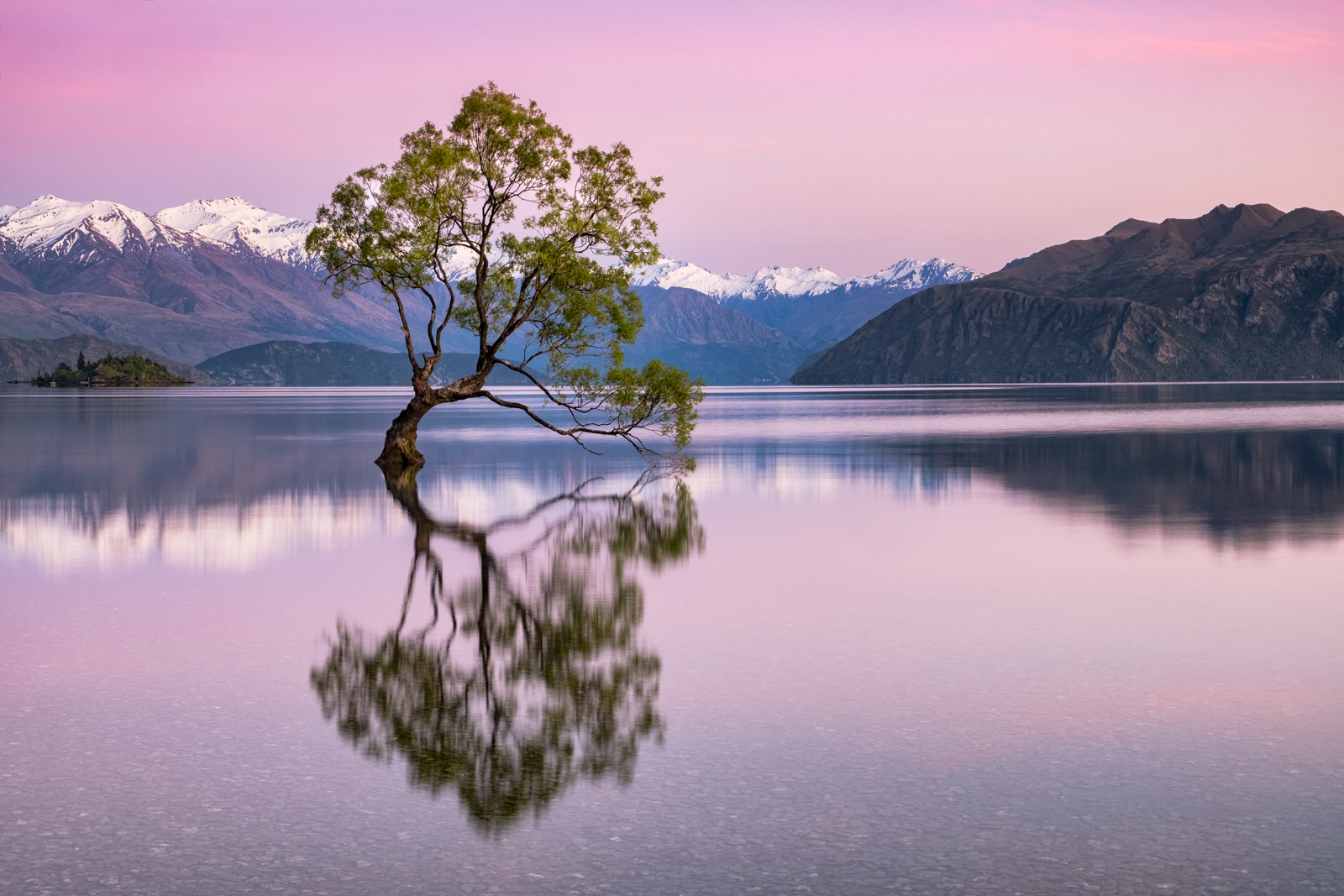 Wanaka Tree in Spring.jpg